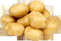 مشروع تنمية صادرات البطاطس - بالسودان